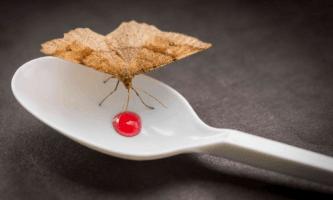 Cómo eliminar y prevenir la aparición de mariposas de la comida