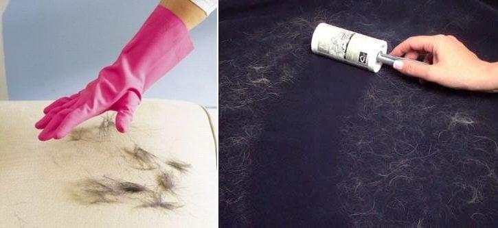 Cómo eliminar el pelo de tus mascotas del suelo, los muebles y la ropa