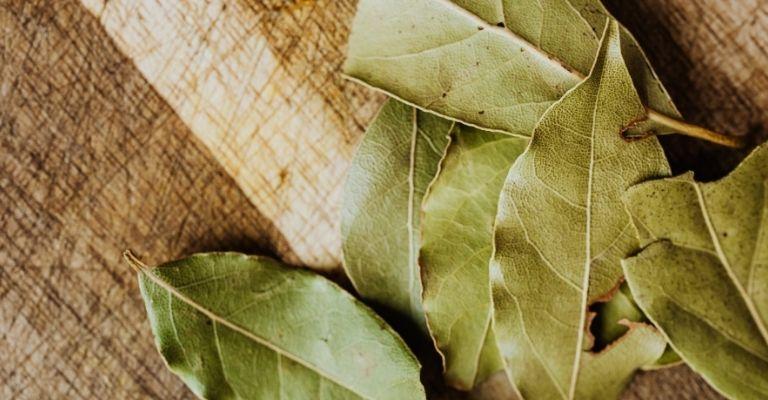 cómo-eliminar-las-hojas-de-laurel-pez-plateado
