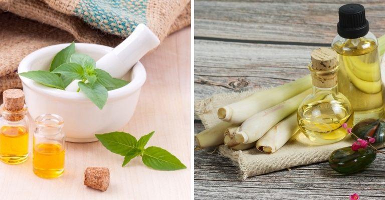 Aceites esenciales de menta y limoncillo