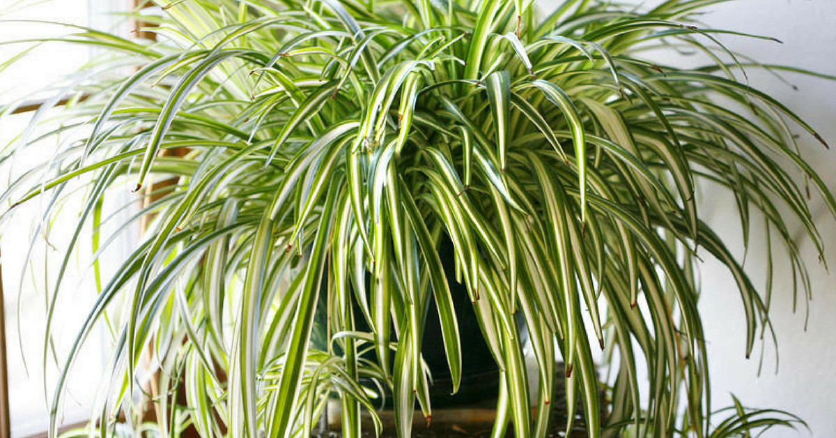 9 plantas que purifican el aire en casa de forma natural