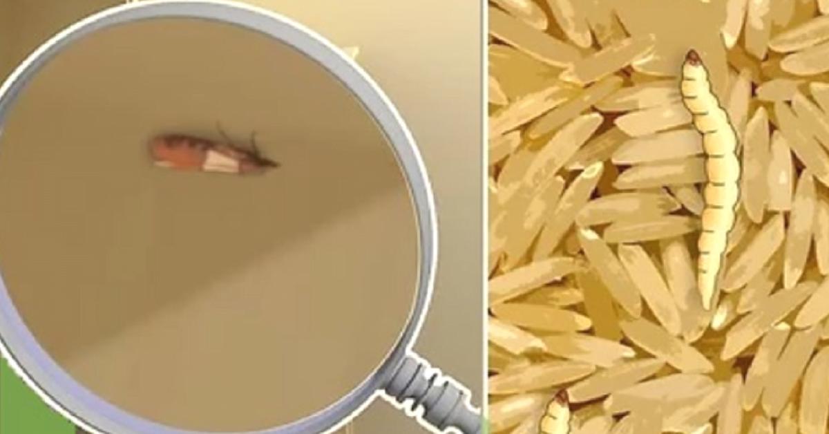 Cómo eliminar las polillas de la comida