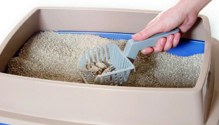 Cómo limpiar los accesorios de nuestros animales: 4 soluciones