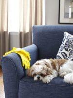 3 consejos para eliminar el pelo de las mascotas de la tela del sofá
