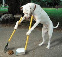 Limpieza de perreras