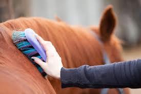 limpieza de caballos2