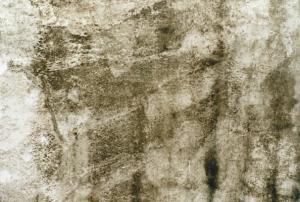 mancha de gorgojo