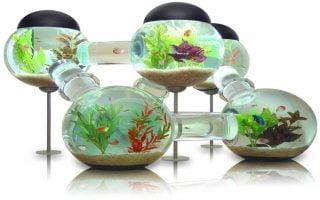 Consejos infalibles para limpiar las algas del acuario