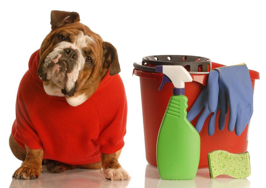 perros de limpieza