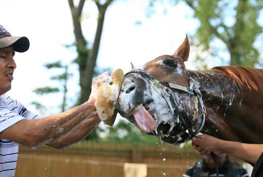 caballo de limpieza